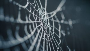 complexity-spider